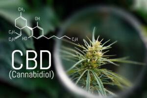 CBD & Cerveau : effets sur les recepteurs CB1 et CB2