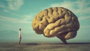 CBD & Cerveau : Les effets du CBD sur le cerveau