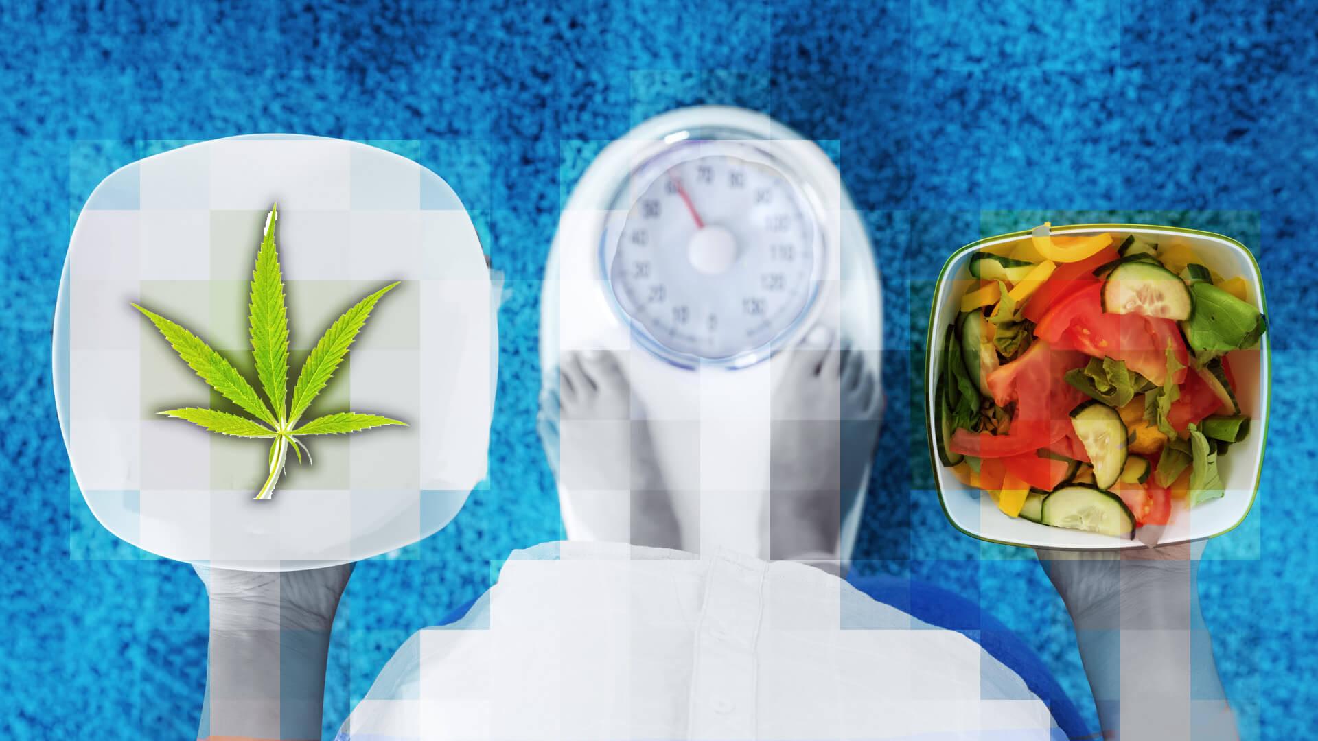 régime CBD et perte de poids